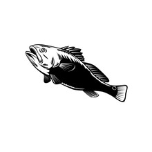 Red Drum Spottail Bass Redfish...
