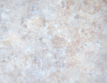 Pale Gray Marble With Beige Ve...