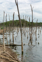 Lakeside Of Dead Salt Lake Tambukan With Dry Trees In The Water, Stavropol Region, Russia