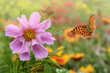 Leinwanddruck Bild Schmetterling 706