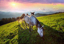 Horses In The Carpathians