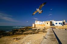 Muralla Portuguesa(s.XVIII).Essaouira (mogador). Costa Atlantica. Marruecos. Magreb. Africa.