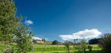 Under An Expansive Blue Sky An...