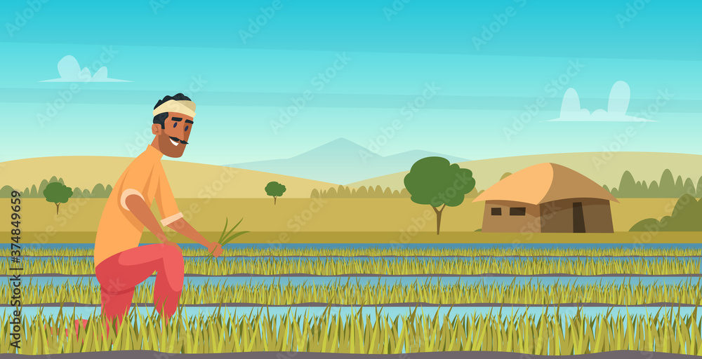 Fototapeta Indian agriculture working. Farmer harvesting in field asia vector background in cartoon style. Farm agriculture, worker indian farming illustration