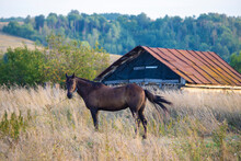 Russian Villagescape. A Horse Grazes Against The Backdrop Of An Old Village House. High Quality Photo