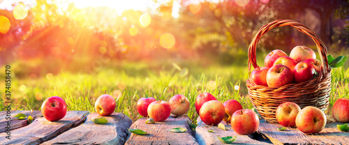 Fotografija Red Apples In Basket On Wooden Table in Orchard At Sunset - Autumn Background