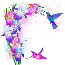 Vector Floral Wreath With Bright Multicolored Iris Flowers And Flying Hummingbirds With Empty Space For Your Text