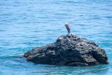 海の岩場で休む野鳥