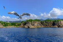 絶景の尖閣湾を行く