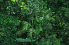 Tropical Forest Canopy Background, Nature Scene Tree In The Wild With The Earth Day Concept