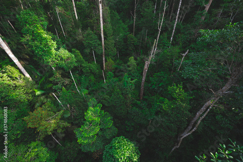 tropical forest canopy background, nature scene tree in the wild with the earth Wallpaper Mural