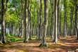 canvas print picture - Der Gespensterwald von Nienhagen