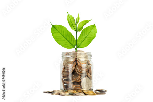 Fotografie, Tablou Glass jar is full of coins and has a treetop on top over white background