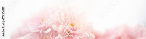 Fototapeta Nature of pink flower in garden using as background natural cover page obraz