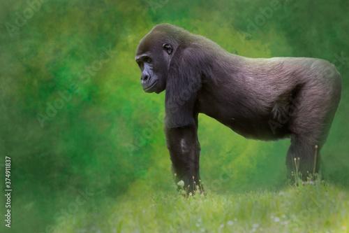 Платно a gorilla in a field