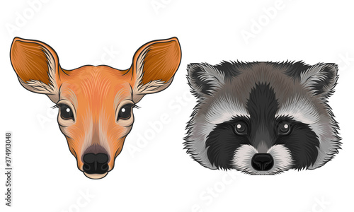 Deer and Striped Raccoon Muzzle with Fur Vector Set Wallpaper Mural