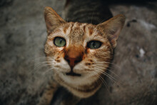 Close Up Portrait Of A Tabby Cat At A Funny Angle