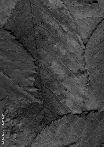 Obraz na plátne Dark leaves background. Natural black organic texture.