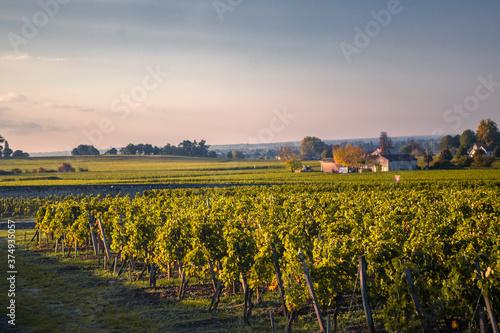 Canvastavla The big vineyard in Saint Emilion at sunset.