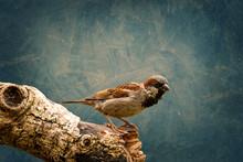 Sparrow On A Log