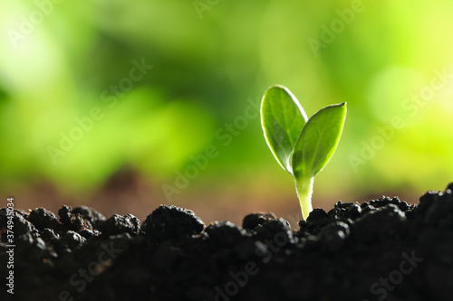Young vegetable seedling growing in soil outdoors, space for text Canvas Print