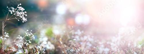 Obraz na plátně Blurred gentle natural background