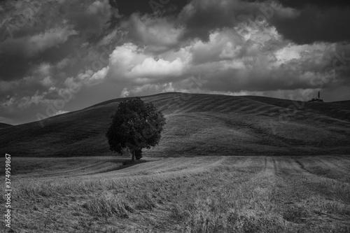 colline toscane Billede på lærred