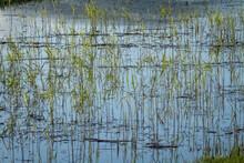 Green Grasses On A Blue Lake