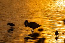 Ptaki Wodne Odpoczywające Nad...