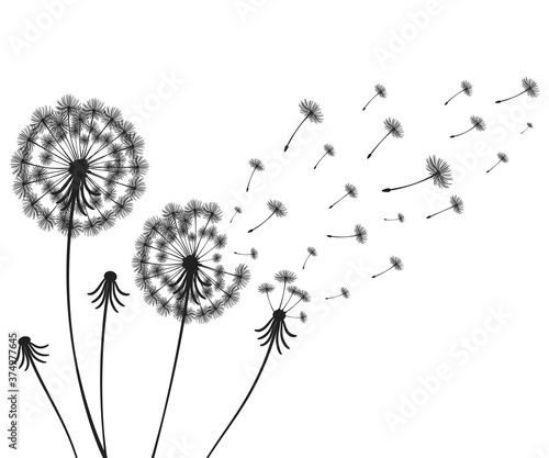 Vector illustration dandelion time Canvas Print