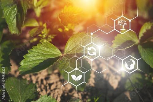 Fotomural Agriculture.