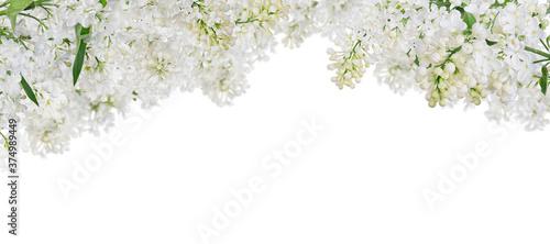Fotografie, Obraz isolated pure white lush lilac stripe