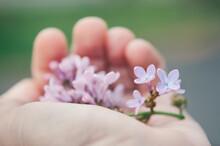 Hand Holding Purple Lilac Flower