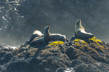 Sea Lions Basking On The Rock ...