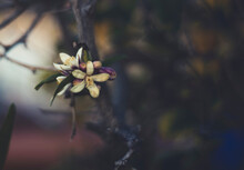 Orange Blossoms On A Branch Against A Dark Background