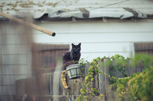 Black Cat In A Basket On Fence