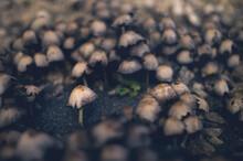 A Solitary Mushroom Faces Many