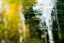 Autumn Rain In Forest Through ...