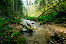 Small Creek Inside Forest In Spring At Linn