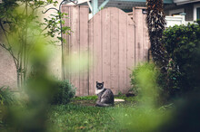 Grey Cat In Front Of A Fence I...