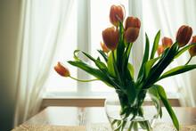 Bouquet Of Orange Tulips, Backlit By Window