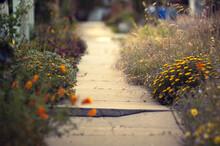 Cracked Sidewalk Leads A Path ...