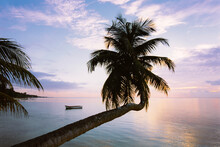 Leaning Palm Tree At Sunset, A...
