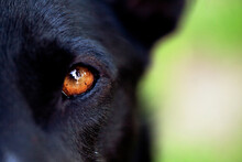 Extreme Close-up Of Brown Dog'...
