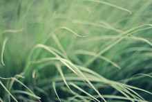 Abstract Of Grass Blowing In B...