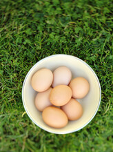 Bowl Of Fresh Eggs In Grass