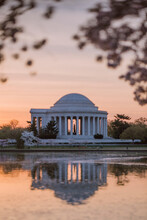 Jefferson Memorial During Sunrise Framed By Cherry Blossoms