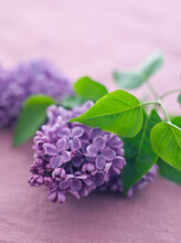Closeup Of Shot Of Lilac Flowers