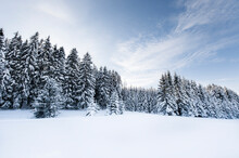 Forest In Winter Landscape