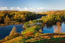 Autumn Colours At Tarn Hows Nearr Hawkshead, Lake District, Cumbria, England, UK